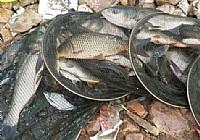 夏季酷暑钓水库鲤鱼鲢鱼大爆护