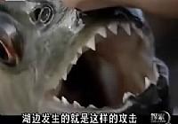 《河中巨怪》第一季 第1集 食人鱼的进攻视频