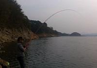 2013年最后一次水库钓鱼收获大鲤一条