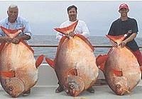 美国海钓爱好者一天钓获3条大型月亮鱼