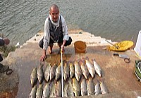 钓坛神人凤凰谷水中遛鱼