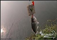 冬季翻板钩爽钓鱼