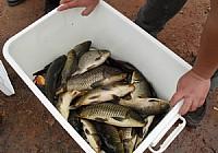 继光水库狂钓鲤鱼40斤