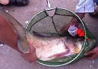 《水库钓鱼视频》水库抛竿钓鲢鳙鱼