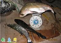 钓友使用鱼猎人路亚竿在荆州水库路亚15斤翘嘴