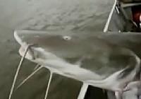 《河中巨怪》第六季 第3集 粉身碎骨