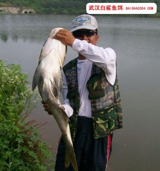 秋季外出钓鱼注意网事项