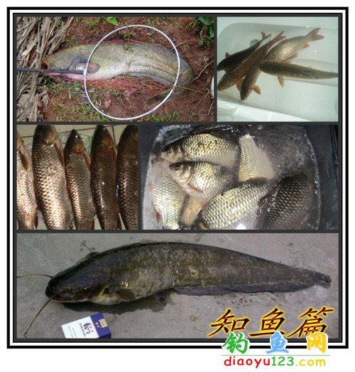 水庫釣鯉魚鯽魚草魚