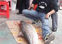 使用狼王渔轮钓获65斤大?鱼