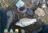 毛毛虫钓鱼记