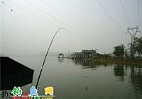 钓友老王在黄石磁湖用十三米手竿钓获40斤大青鱼