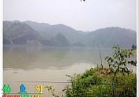夏季在沅水河用鲜虾饵钓红鮹
