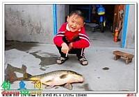 夏季在崮山寺水库钓获鲤鱼9.3斤大鲤鱼
