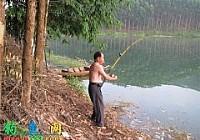 凤亭水库钓鱼钓获三条大鲤鱼