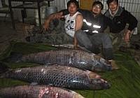 横山湖擒获80斤大青鱼,钓鱼技巧不一般