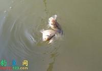 在江河水库垂钓鲫鱼时如何选择钓位