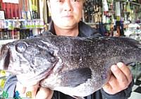 前三岛海钓路亚到大鲈鱼