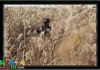 传统钓中的长竿短线在冬季钓草窝的技巧