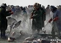 查干湖冬季捕鱼收获数十万斤