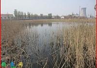 春季垂釣南一塘收獲清一色的野生鯽魚