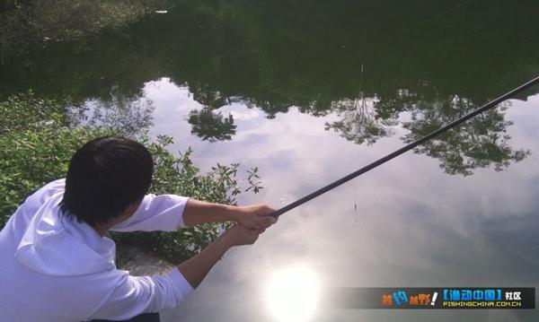 鱼塘钓草鱼