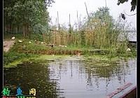人家釣魚爆護我們釣魚滿倉?沱湖船釣