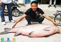 钓友在湖北钟祥黄坡水库钓获143斤大青鱼