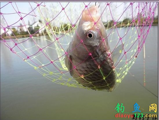 鱼塘钓大鲫鱼