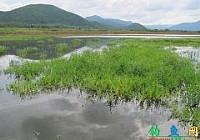 泰国野生水域路亚斩获巨多曼