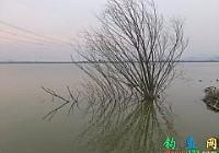 冬季蚯蚓釣大鯽誰知釣到大草魚