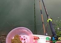 钓鱼塘成功150元每小时钓获草鱼鲤鱼92斤