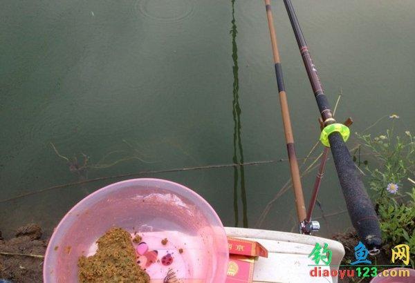 鱼塘钓鲤鱼