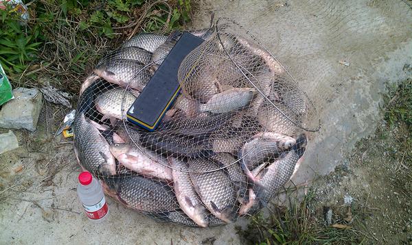 冬季鱼塘钓鲫鱼