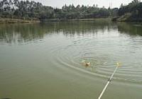 钓友在山塘钓获3斤重金黄色野生大鲫鱼