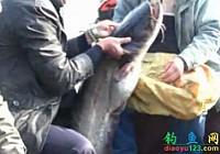 《水庫釣魚視頻》樟湖水庫溪口庫灣釣獲巨型鯰魚