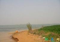 長竿傳統野釣大水面垂釣大板鯽