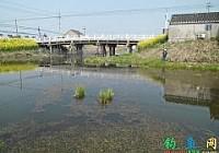 清明時節釣魚忙小河里面擒黃顙釣大鯽