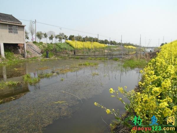 小河釣鯽魚