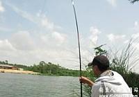 钓鱼破记录手竿钓获17斤的孟加拉鲮鱼
