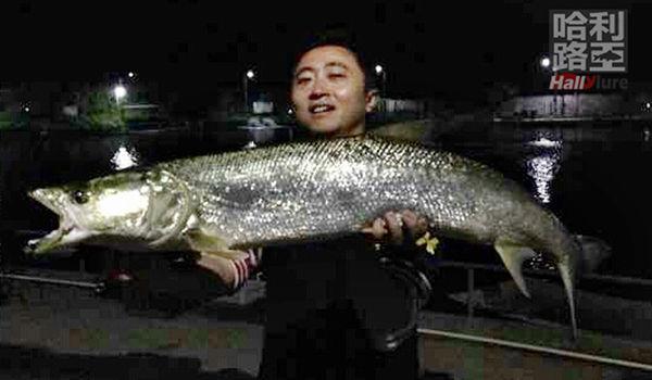 广东钓友路亚到30斤大鱤鱼