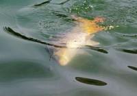 夏季垂钓大鱼打窝小技巧