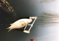 影响钓鱼的三大因素!