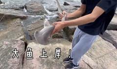 《全球钓鱼集锦》墨西哥湾钓鲨鱼,拉大鱼胳膊拉到软!