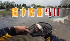 《全球钓鱼集锦》涉水路亚超大体型目标鱼,直呼太大了!
