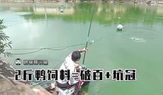 《眼镜哥说鱼》2斤鸭饲料钓罗非大爆护,就是这么霸气!