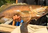 《极限钓鱼》第四季 第3集 巴布亚新几内亚红宝石鲷