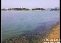 国庆七天钓收获鲫鲤翘鳊鲢等多种淡水鱼