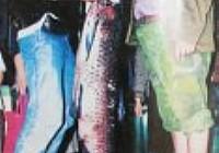 海竿钓获68斤大青鱼遛鱼160分钟成功擒上岸